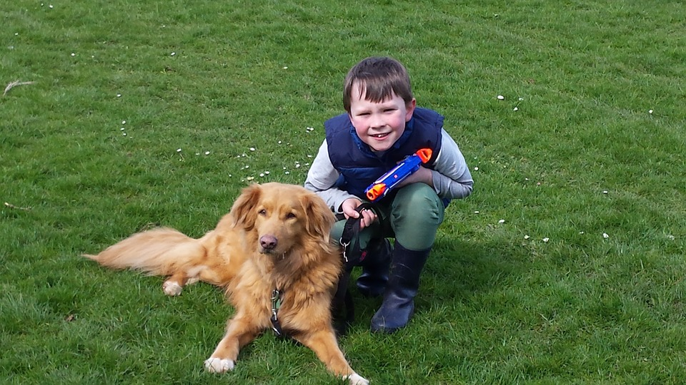 Medical CBD oil for kids and animals